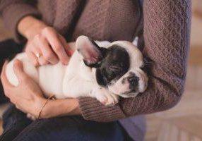 animal-bulldog-canine-129634
